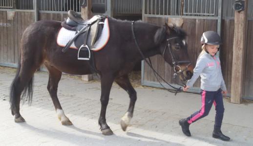 Geschenke für Reiter und Pferdefreunde finden